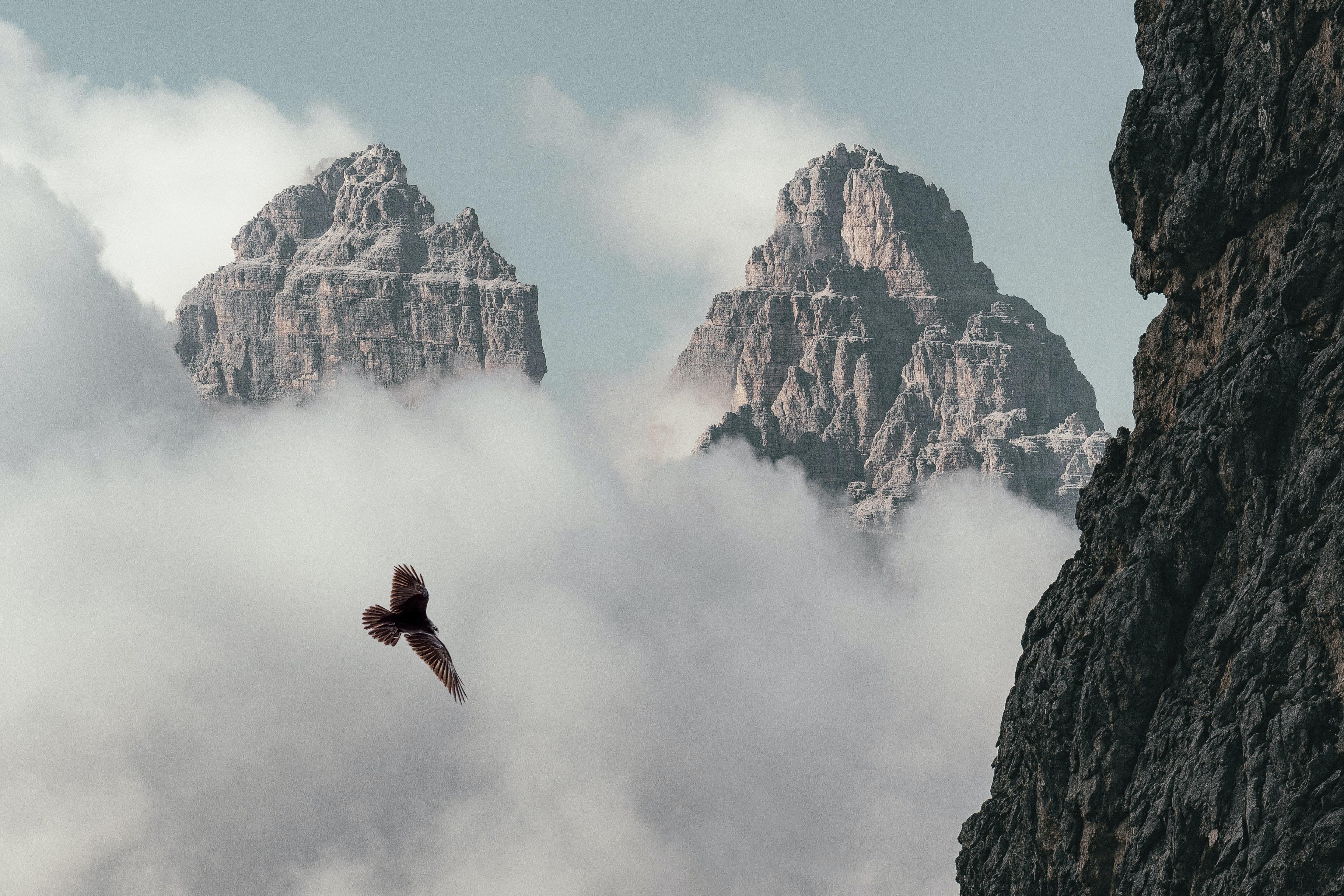 Adler fliegt: Der Blick von oben im Produktmanagement